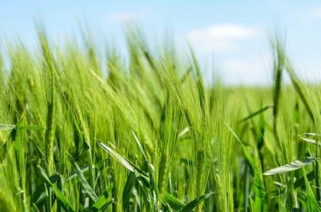 Organik Gübre ve Sofralık Zeytin Destekleme Kapsamına Alındı